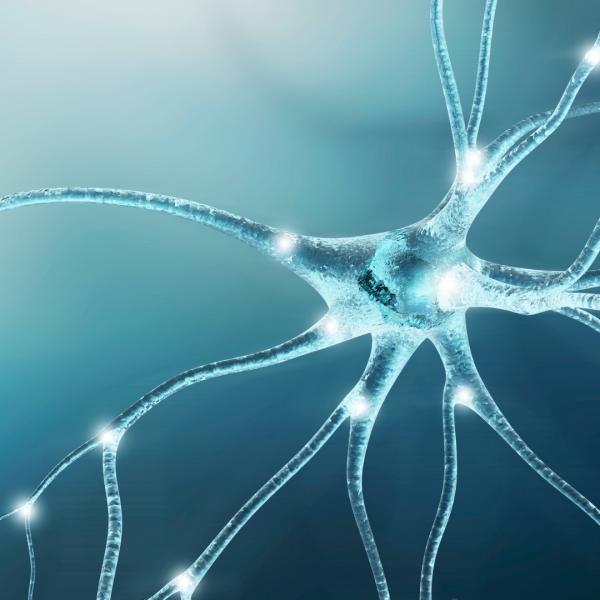 image of nerve