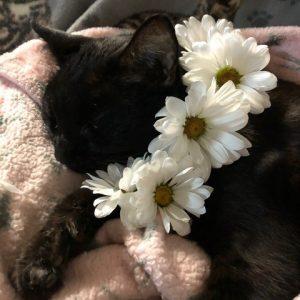 cat with daisy wreath